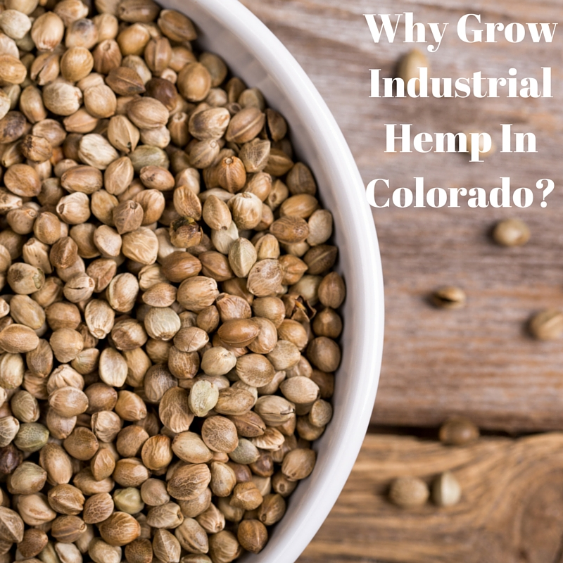 industrial hemp seeds